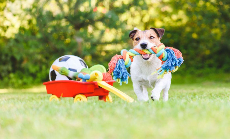 7 Juegos para entretener a tus perros en casa durante la cuarentena - perro-juguetes-juegos