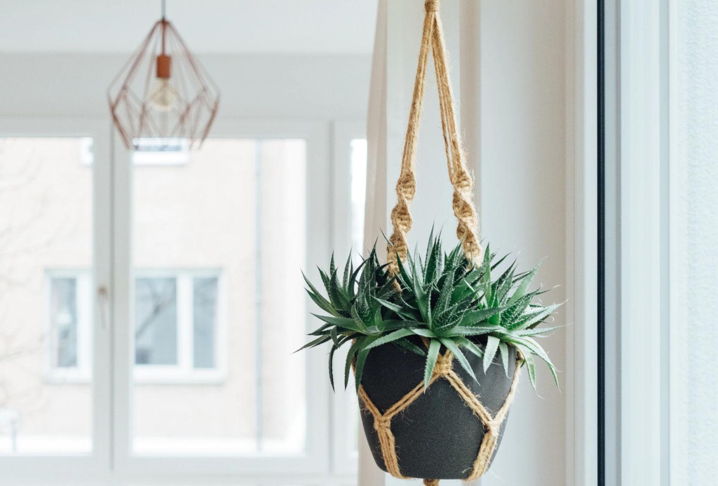 Las plantas colgantes más cool para tu casa, serán originales