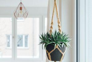 Las plantas colgantes más cool para tu casa