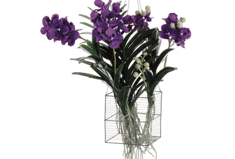 Las plantas colgantes más cool para tu casa, serán originales - plantas-para-colgar-orquideas