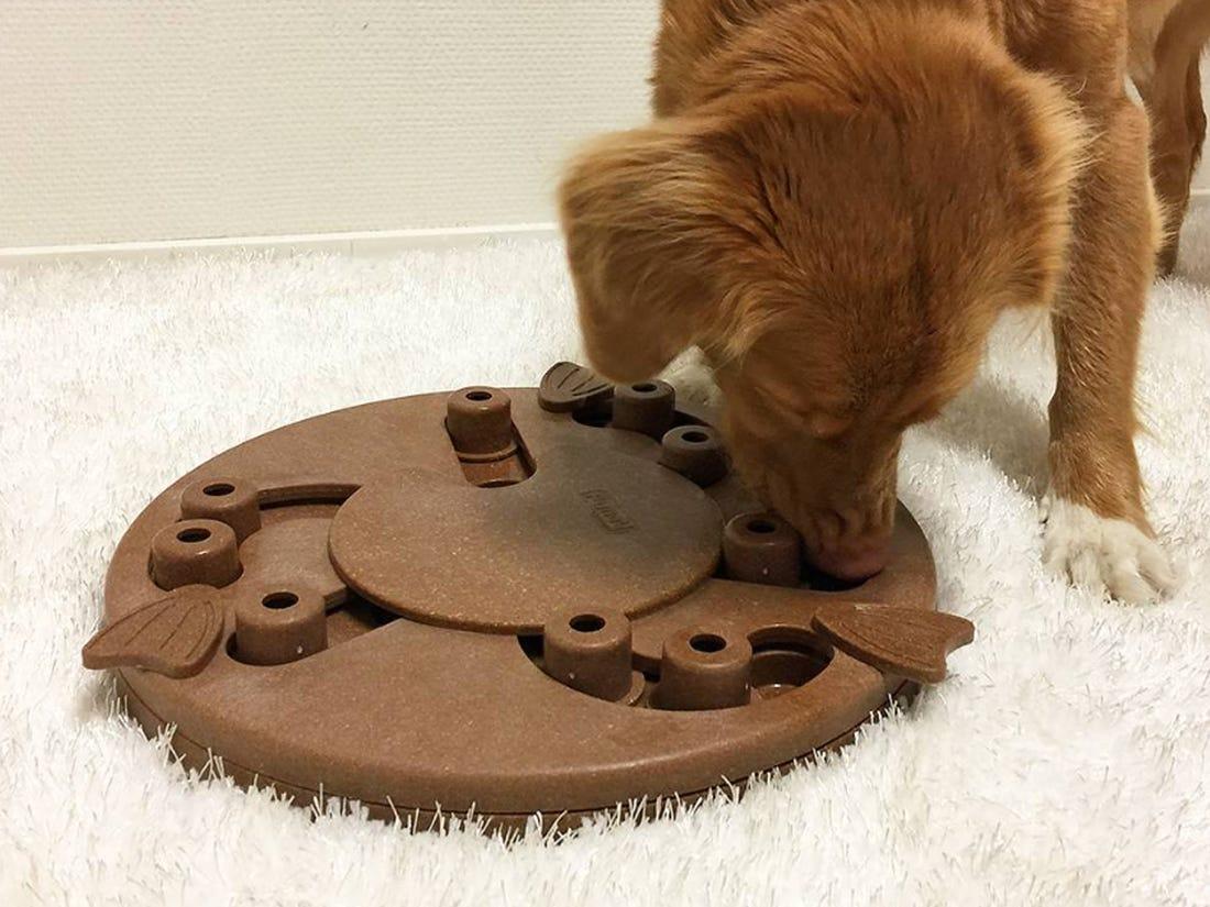 Así puedes mantener ejercitado a tu perro durante la cuarentena - rompecabezas
