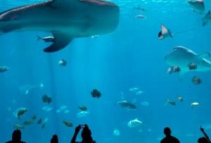 Visita estos acuarios del mundo a través de sus recorridos virtuales
