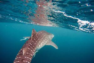 Esta clase de biología marina es todo lo que tus hijos necesitan