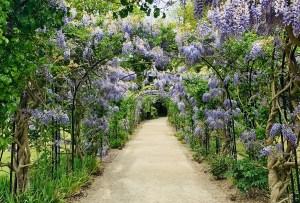 10 recorridos virtuales por los jardines botánicos más bonitos del mundo (uno está en México)