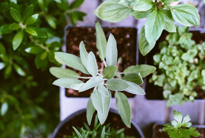 El paso a paso para trasplantar una planta a otra maceta - como-trasplantar-plantas-a-otra-maceta-5