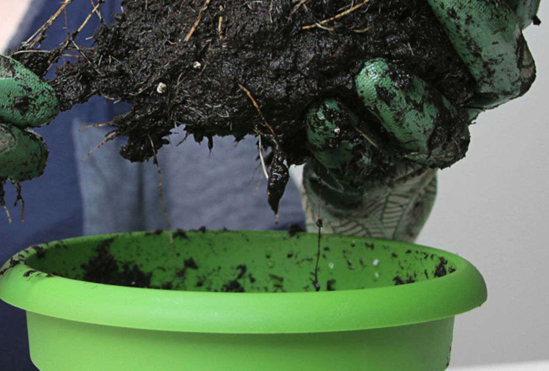 El paso a paso para trasplantar una planta a otra maceta - como-trasplantar-plantas-nueva-maceta