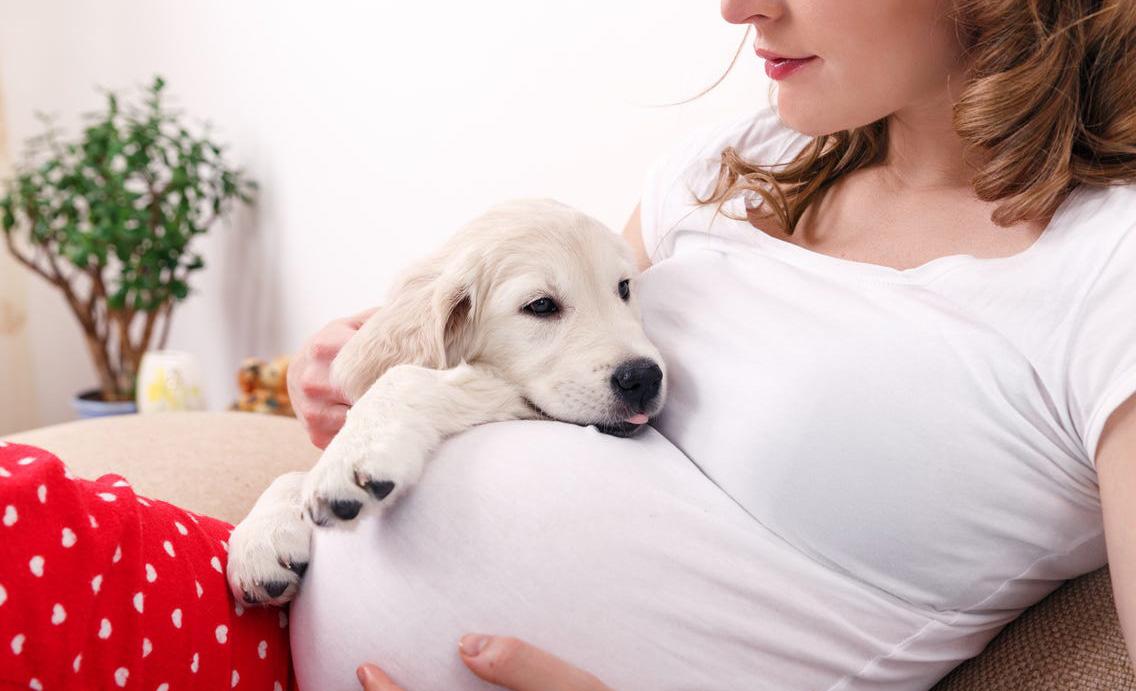 Así debes preparar a tu mascota ante la llegada de un bebé a casa - embarazo-perro
