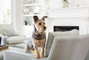 Tu mascota necesita un espacio propio en tu casa. 4 pasos simples para hacerlo