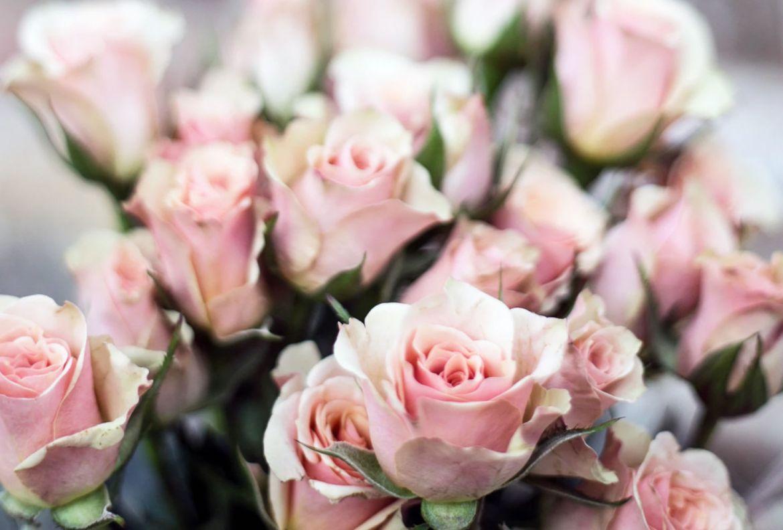 4 flores que pueden ayudarte a reducir tu ansiedad - flores-reducir-ansiedad-rosas