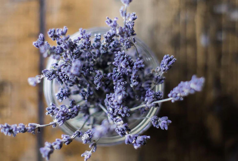 4 flores que pueden ayudarte a reducir tu ansiedad - lavanda-beneficios-para-la-piel-2