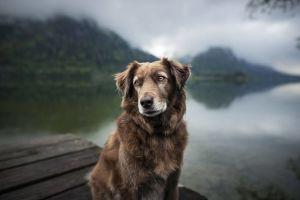 Estos son los perros más viejos de la historia