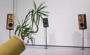 Así es como la música ayuda a tus plantas