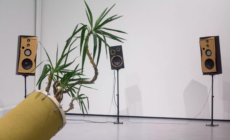La música puede ayudar a tus plantas... Descubre cómo - plantas-musica