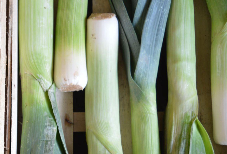 Estas verduras son ideales para volver a cultivar ¡en un frasco con agua! - poro