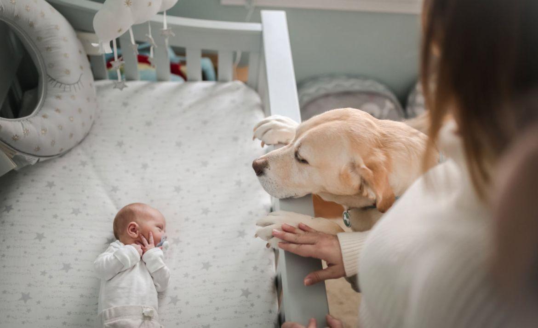 Así debes preparar a tu mascota ante la llegada de un bebé a casa - recien-nacido-perro