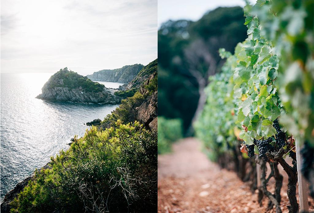 Chanel produce sus propios vinos orgánicos en una isla - vinos-chanel-2
