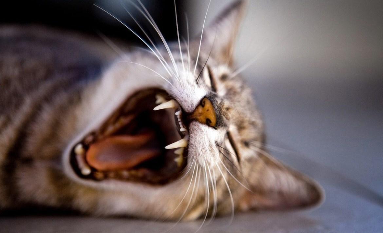 Trucos para tomarle fotografías perfectas a tus mascotas - gato-fotografia-1