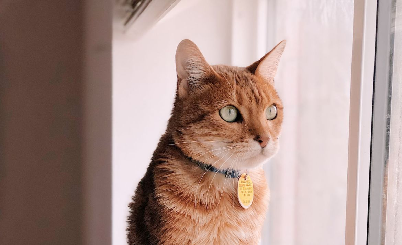 Trucos para tomarle fotografías perfectas a tus mascotas - gato-fotografia