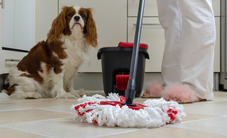 ¡Cuidado! tus productos de limpieza pueden lastimar a tus mascotas - limpieza-perro