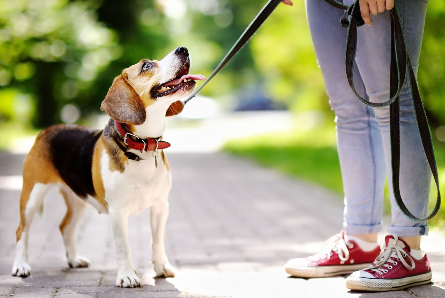 Conoce los increíbles beneficios de pasear a tu perro