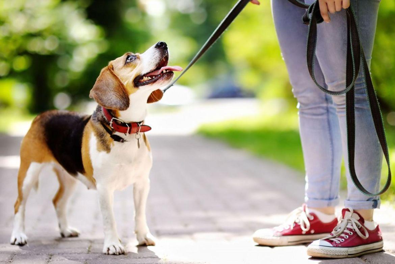 7 beneficios de adoptar un perro - pasear-perro