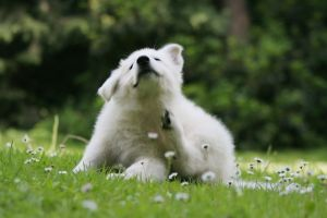 Estas son algunas de las alergias más comunes en los perros
