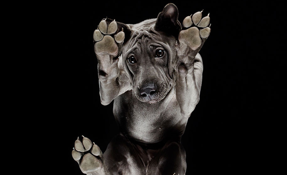 Trucos para tomarle fotografías perfectas a tus mascotas - perro-patas
