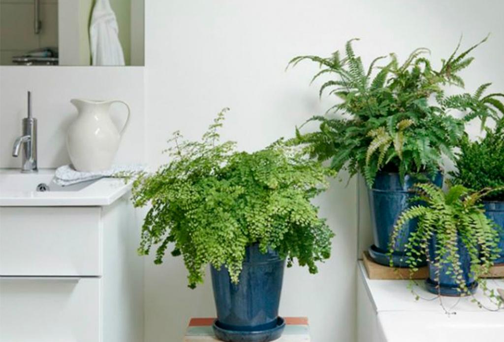 6 plantas ideales para espacios con poca luz natural - plantas-poca-luz-5