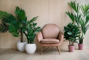 6 plantas ideales para espacios con poca luz natural