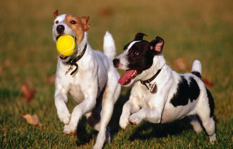 Conoce los increíbles beneficios de pasear a tu perro - sociable