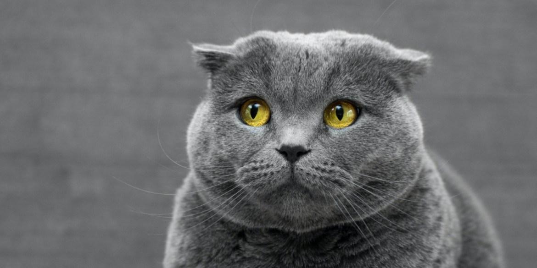 Cómo entender el lenguaje corporal de tu gato - leguaje-corporal-gatos-3