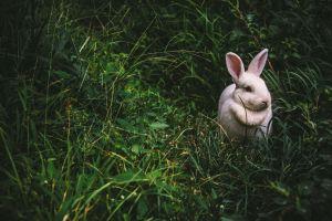El conejo y otros animales de poder, ¡conoce el tuyo!