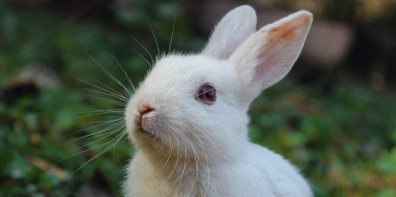 El conejo y otros animales de poder, ¡conoce el tuyo! - animales-de-poder