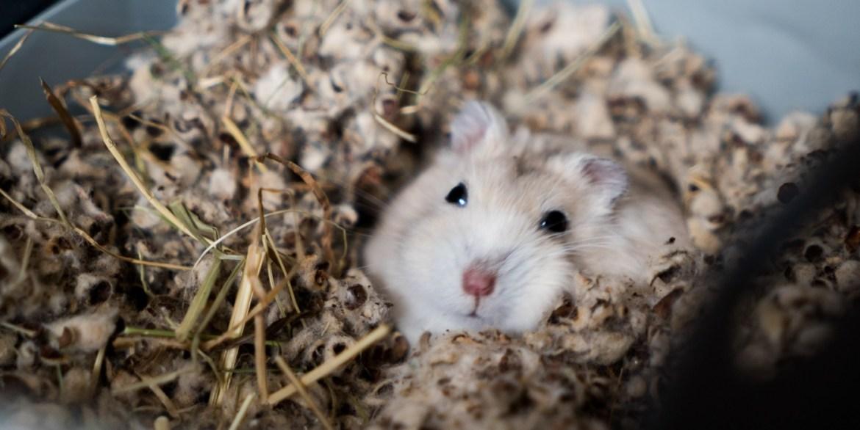 Toma nota de los cuidados básicos para tus roedores en casa - cuidados-para-roedores-2