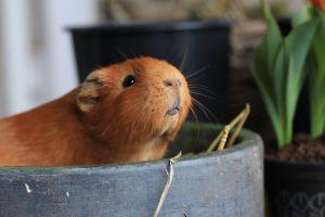 Toma nota de los cuidados básicos para tus roedores en casa