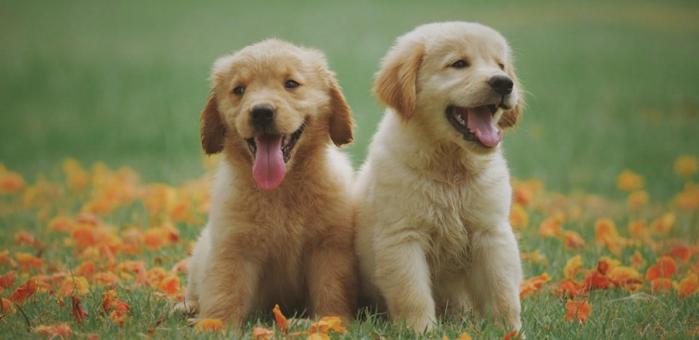 Enseñanzas espirituales que te da tu perro y no lo sabías - diseno-sin-titulo-81