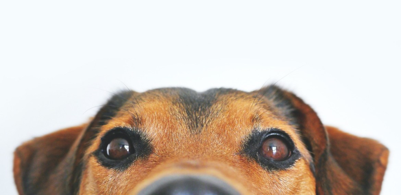 Enseñanzas espirituales que te da tu perro y no lo sabías - diseno-sin-titulo-84