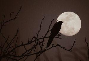 ¿Sabías que la luna llena afecta el comportamiento de los animales?