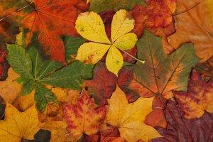 Happenings: Todo lo que puedes hacer este fin de semana en casa (25 – 27 septiembre)