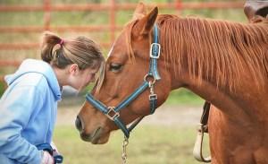 Estos animales son terapéuticos y tal vez no lo sabías