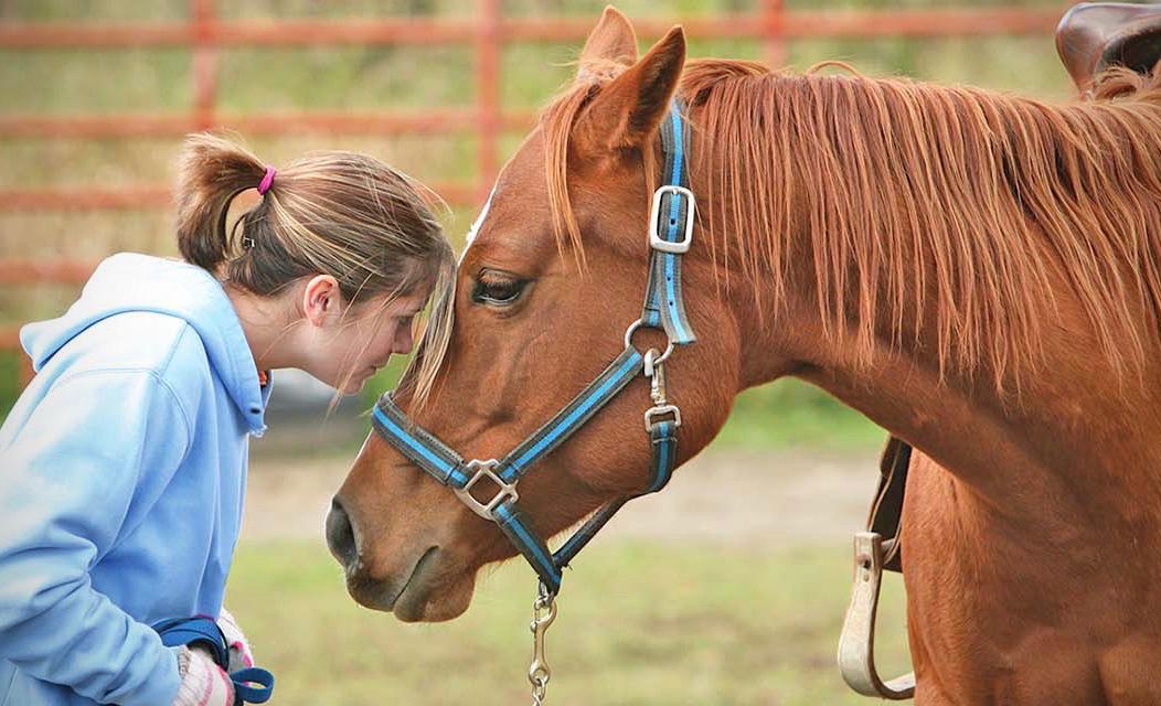 Estos animales son terapéuticos y tal vez no lo sabías - caballo-terapia