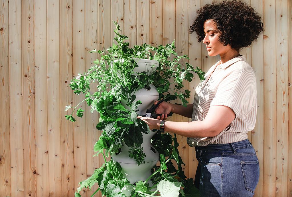 Este utensilio de cocina será tu nueva herramienta de jardinería