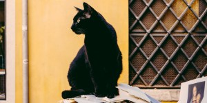 Tres mitos falsos sobre los gatos negros