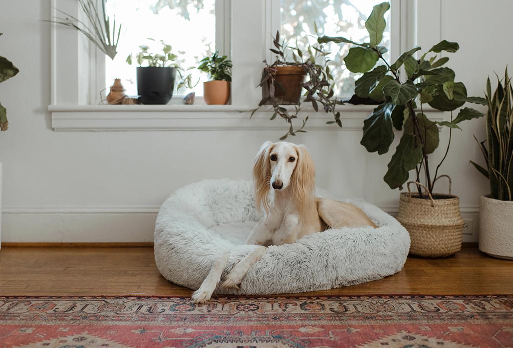 Deshazte del olor a perro con aceites esenciales