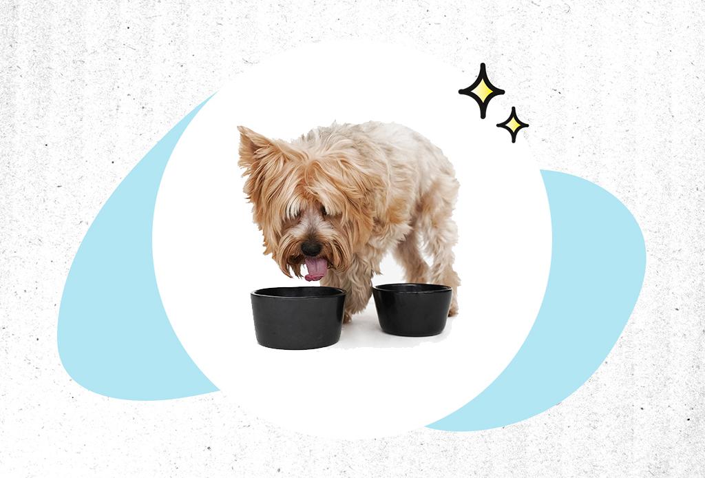Guía de Regalos: ideas perfectas para un pet lover - regalos-mascotas-2