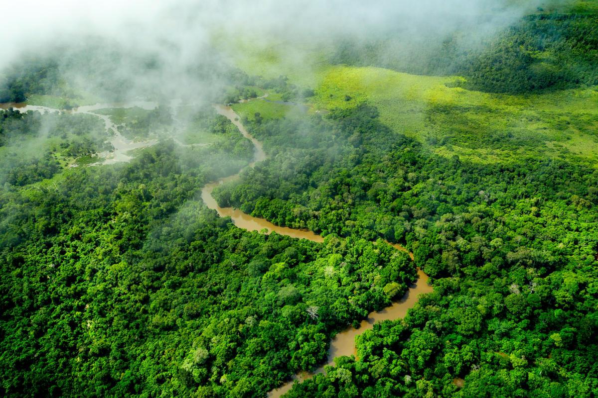 La gran muralla verde que está combatiendo el cambio climático