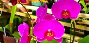 Tipos de orquídeas más populares que tienes que conocer