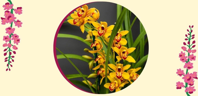 Tipos de orquídeas más populares que tienes que conocer - sabrina-27-1