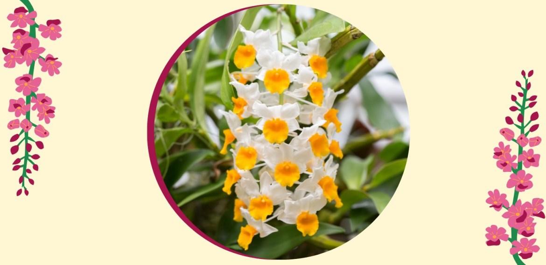 Tipos de orquídeas más populares que tienes que conocer - sabrina-28-2