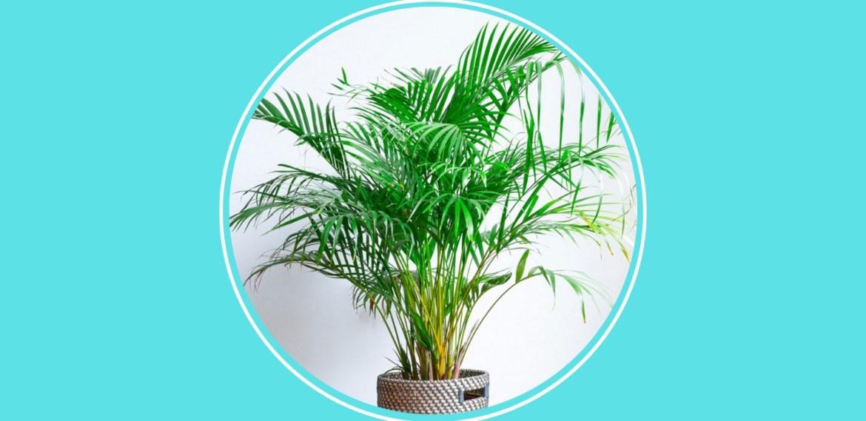 5 plantas pet friendly que debes tener en casa para cuidar de tus mascotas - sabrina-83